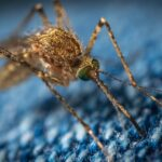 Effective Methods To Get Rid Of Annoying Mosquitoes In Your House